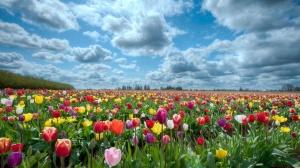 flowers-wallpaper-7