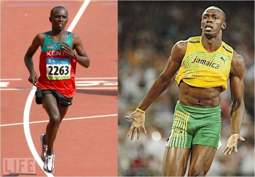 ランナーとスプリンターの筋線維